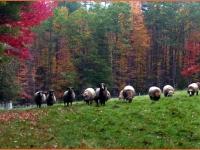 Long Ridge Sheep Farm