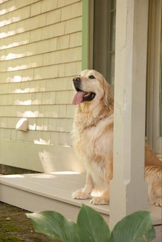 pet friendly hotels in New Hampshire
