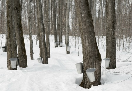 Maple Syrup Taps in Vermont