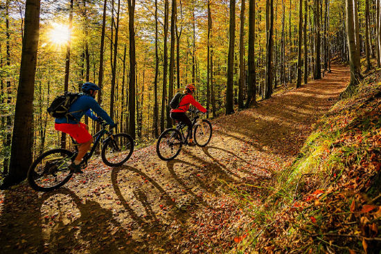two people biking down a wooded trail