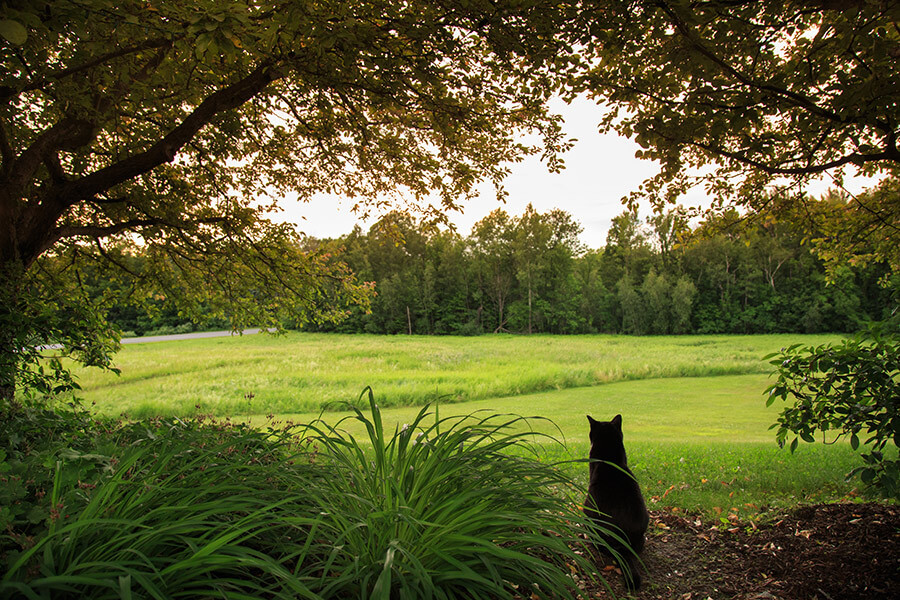 cat sitting on the edge of a grassy field surrounded by trees