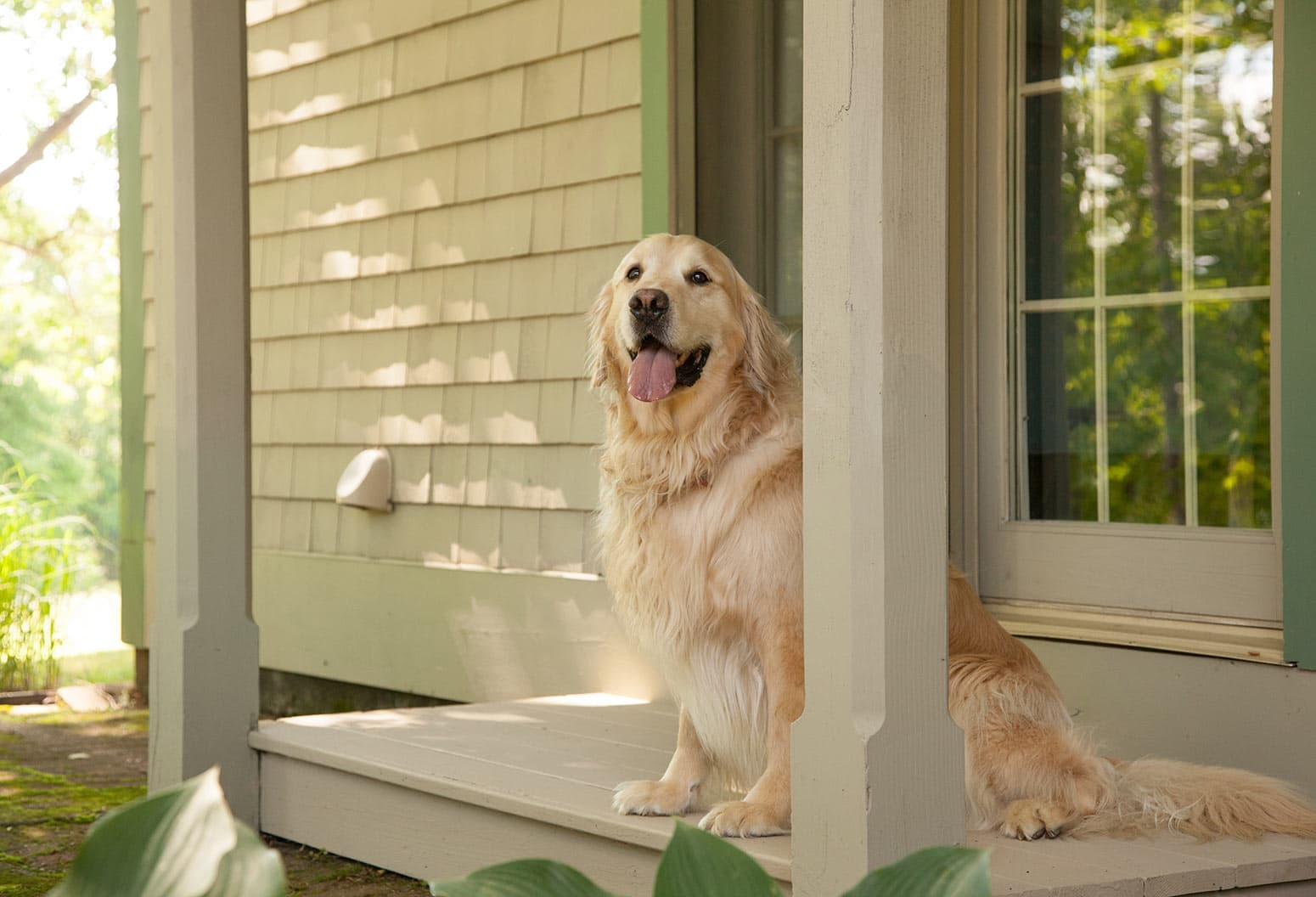 Happy dog on a porch at Pet Friendly B&B