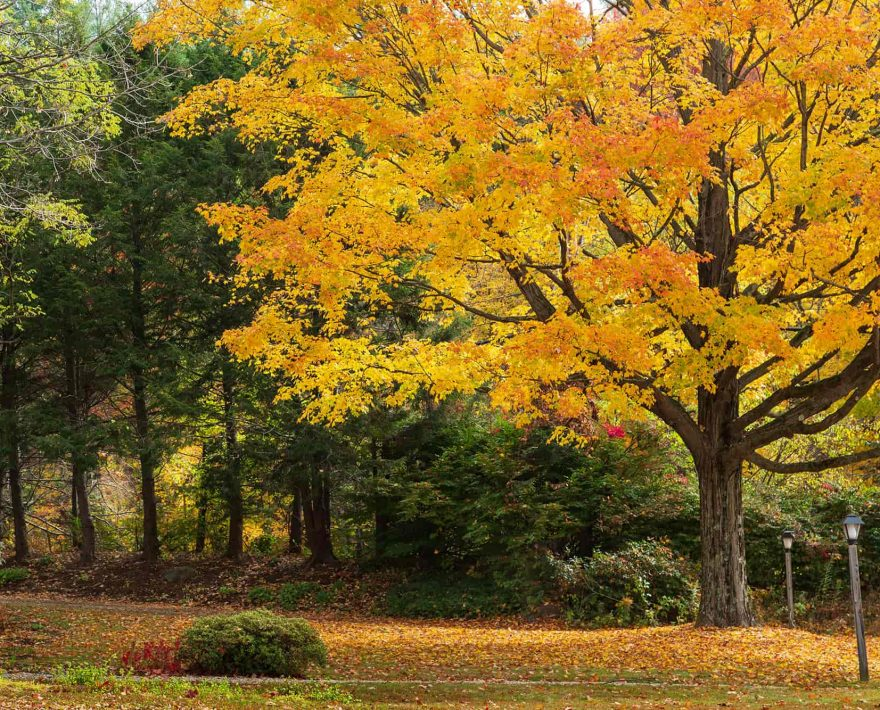 Fall Trees in New Hampshire