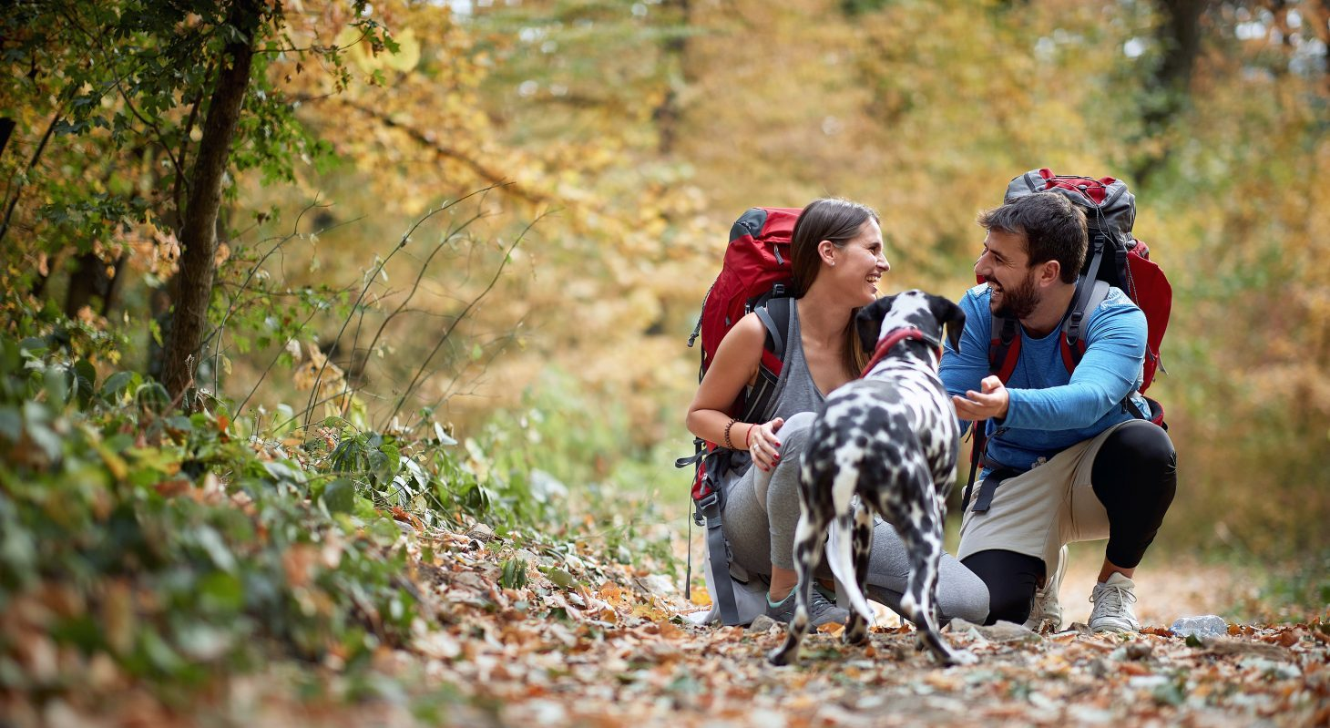 A Young Couple Hiking with their Dog in Chesterfield